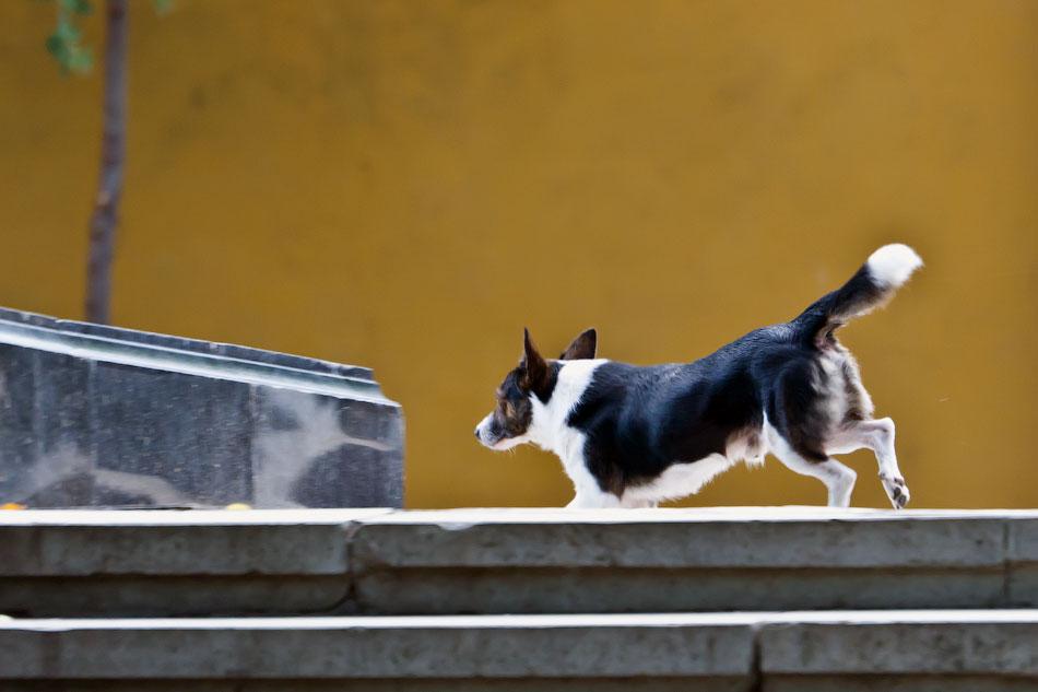 кошки и собаки Тирасполя (27)