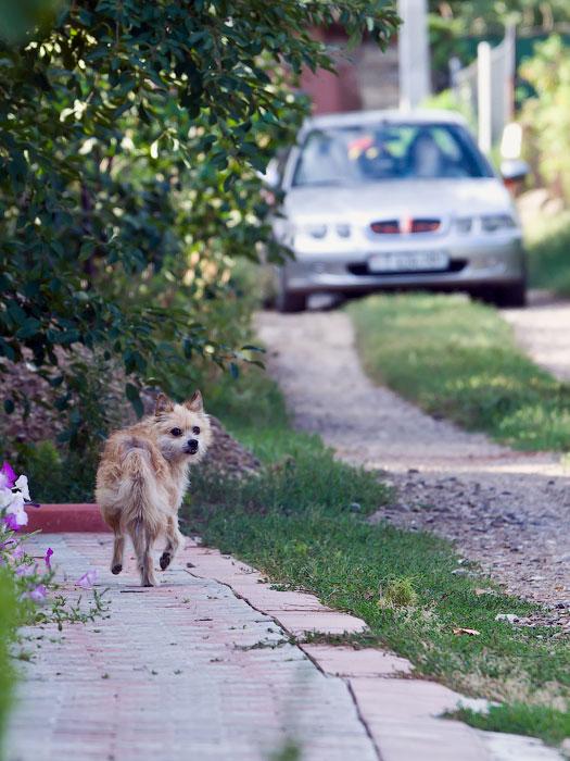 кошки и собаки Тирасполя (29)