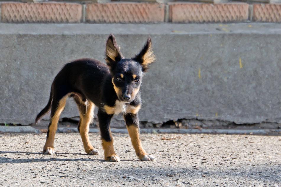 кошки и собаки Тирасполя (30)