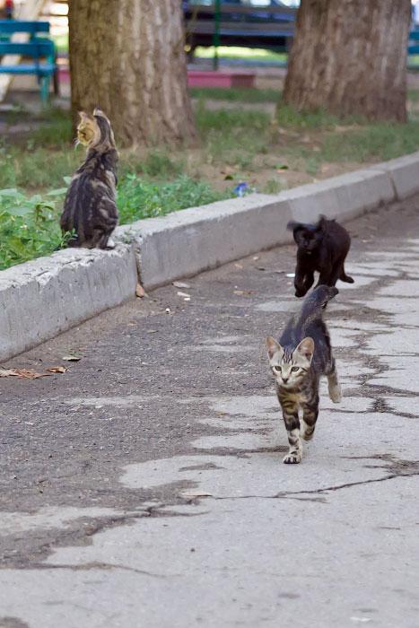 кошки и собаки Тирасполя (31)
