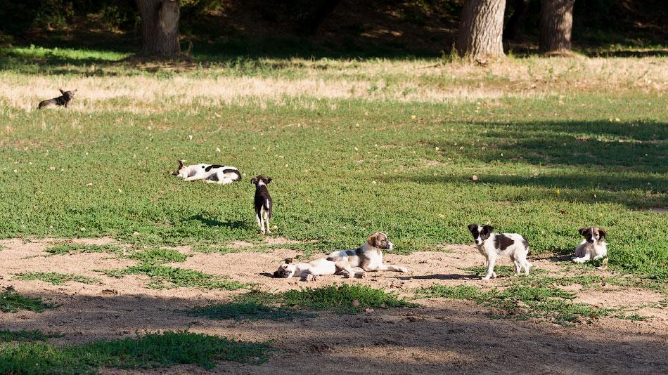 кошки и собаки Тирасполя (32)