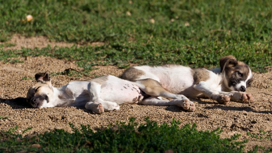 кошки и собаки Тирасполя (33)