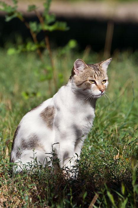 кошки и собаки Тирасполя (36)