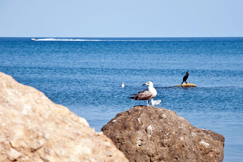 Море, Крым, Орджоникидзе - день первый (2)