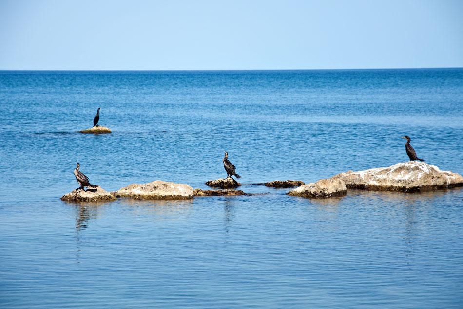 Море, Крым, Орджоникидзе - день первый (3)