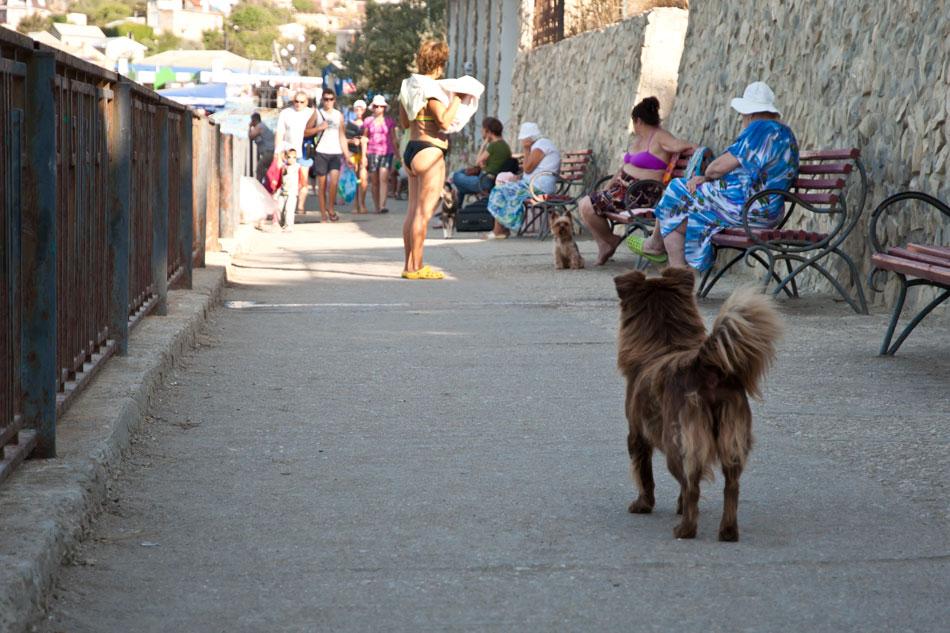 Море, Крым, Орджоникидзе - лето 2012 (16)