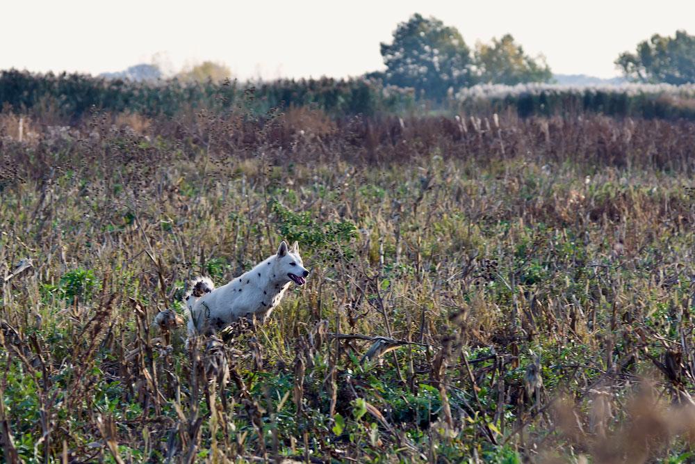 Фотографии с охоты (2)
