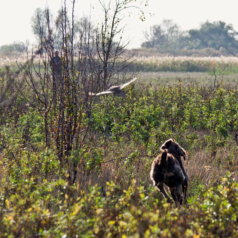 Фотографии с охоты (4)