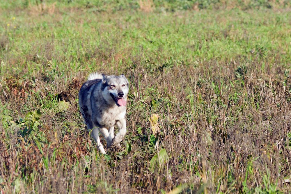 Фотографии с охоты (5)