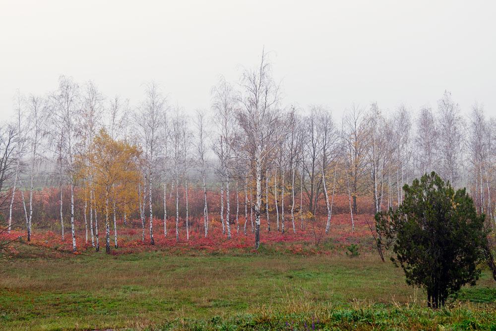Осеннее путешествие на север Приднестровья (Рыбница - Рашково - Монастырь - Строенцы) (6)
