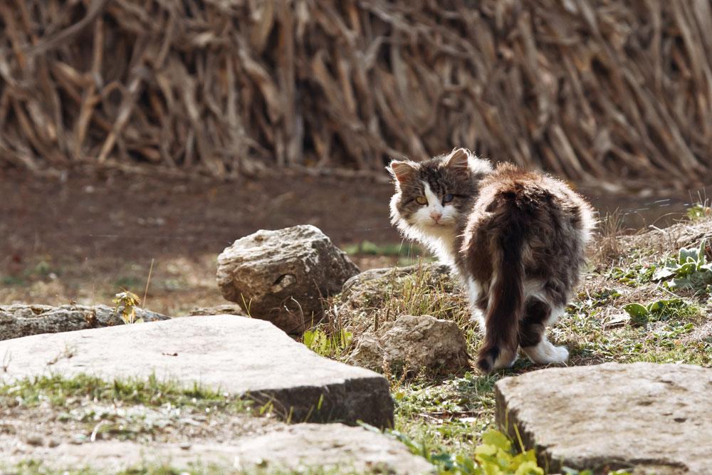 Осеннее путешествие на север Приднестровья (Рыбница - Рашково - Монастырь - Строенцы) (49)