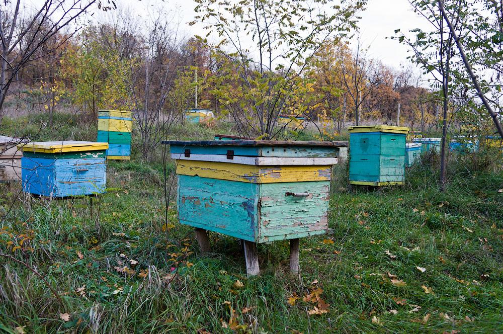 Осеннее путешествие на север Приднестровья (Рыбница - Рашково - Монастырь - Строенцы) (67)