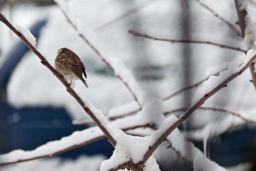 В Молдавии выпал первый снег