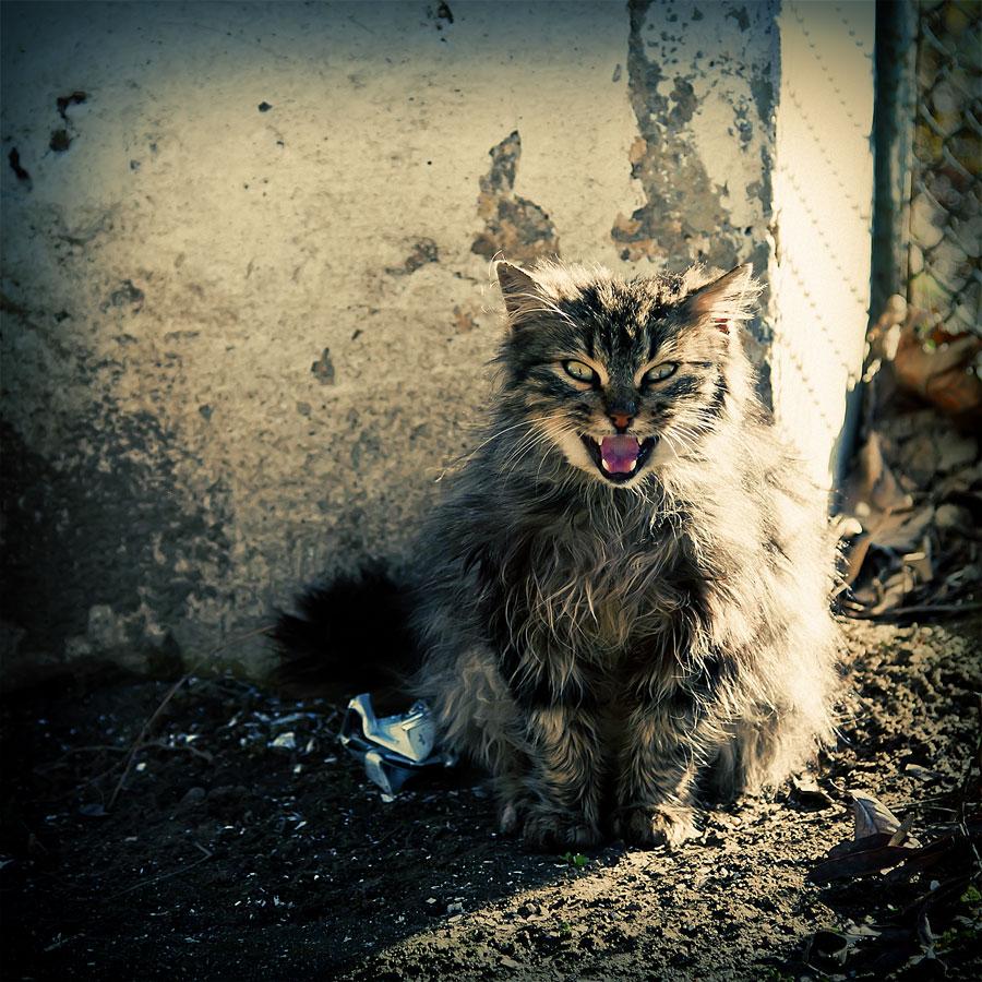 Кошки, с праздником!
