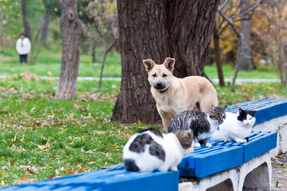 Кошки, собаки и проблема бездомных животных (2)