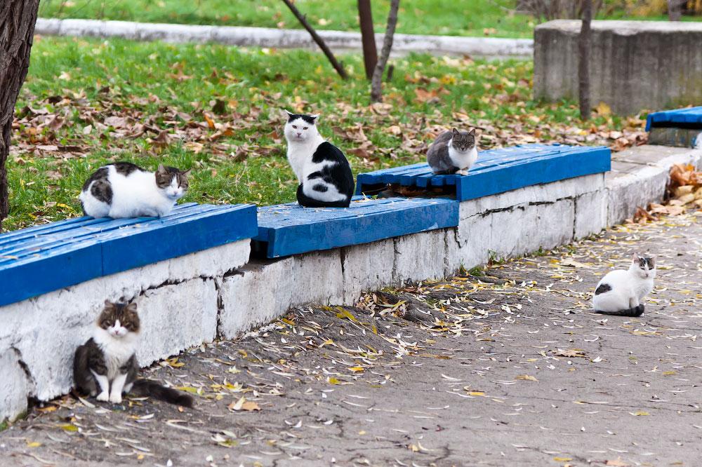 Кошки, собаки и проблема бездомных животных (1)