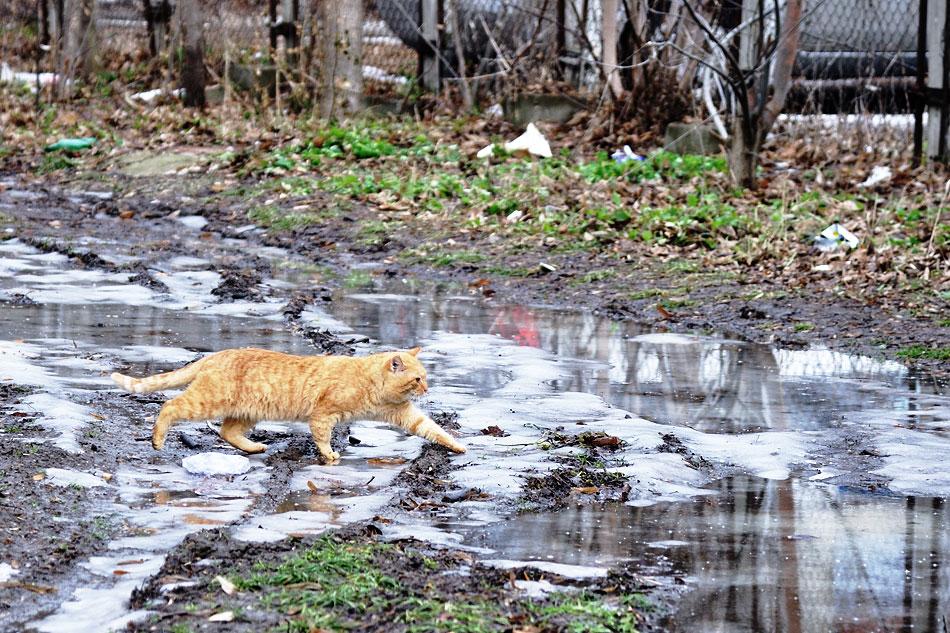 Кошки, собаки и проблема бездомных животных (5)