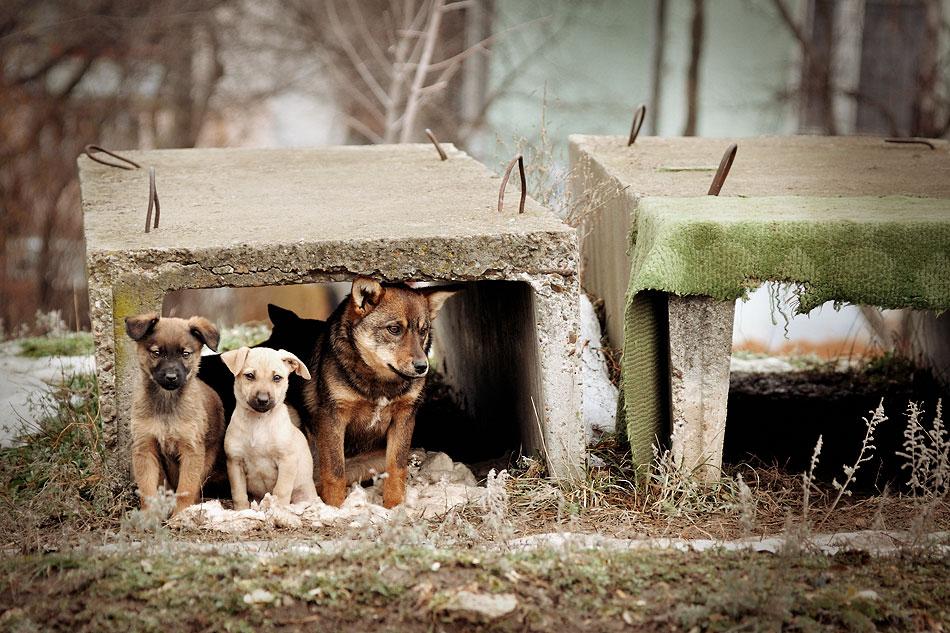 Кошки, собаки и проблема бездомных животных (4)