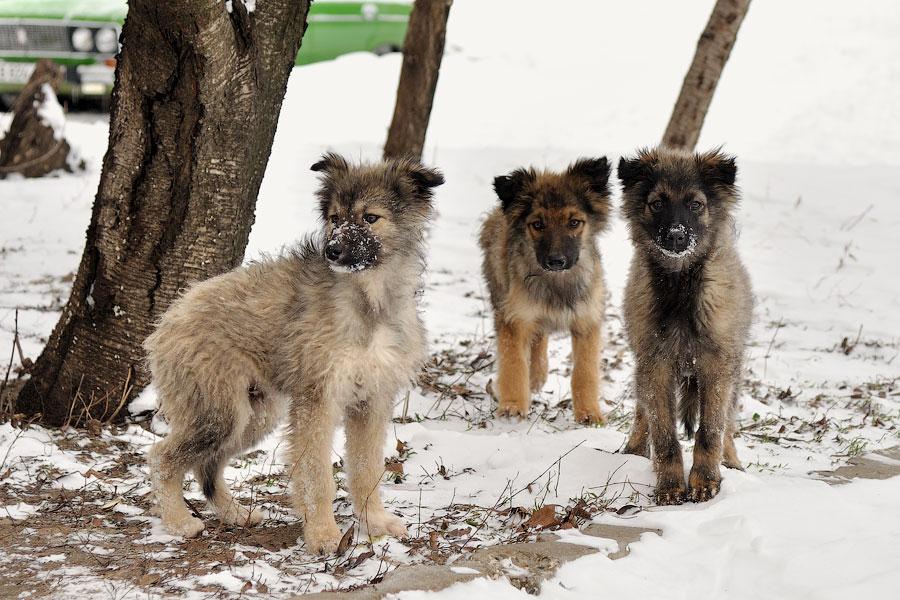 Кошки, собаки и проблема бездомных животных (10)
