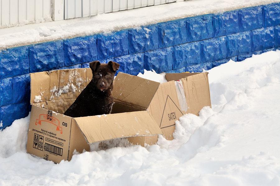 Кошки, собаки и проблема бездомных животных (11)