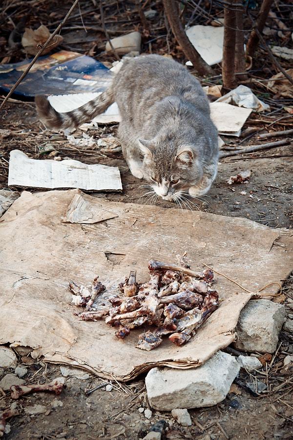 Кошки, собаки и проблема бездомных животных (16)
