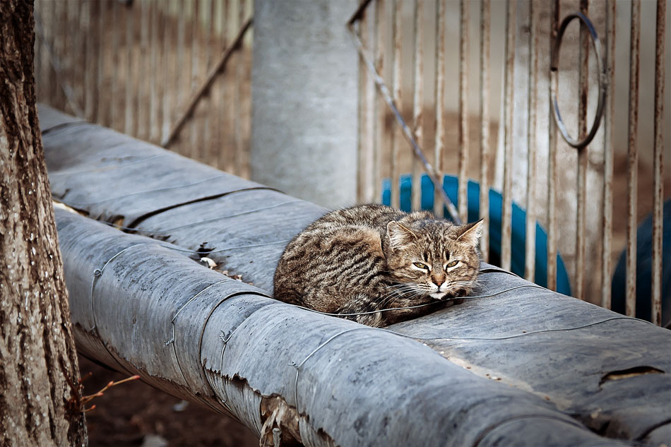 Кошки, собаки и проблема бездомных животных (15)