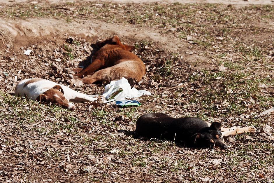 Кошки, собаки и проблема бездомных животных (21)