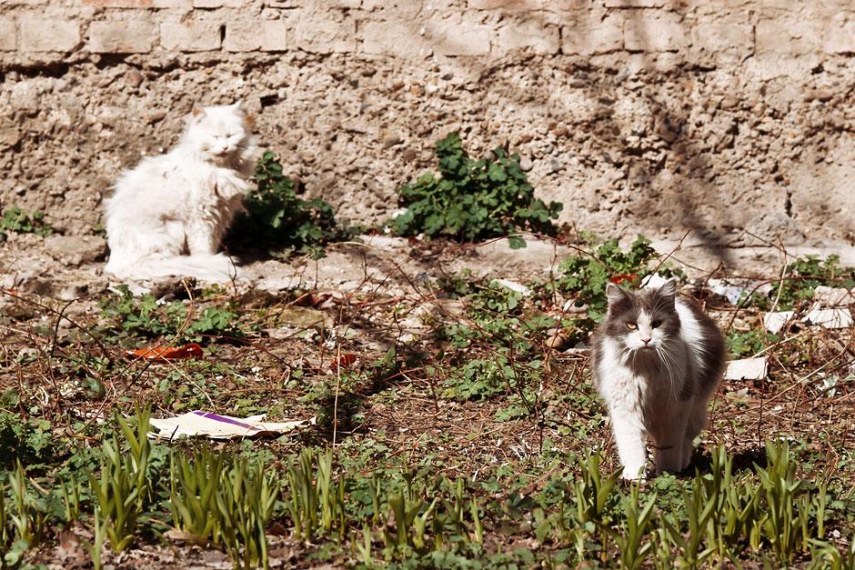 Кошки, собаки и проблема бездомных животных (20)