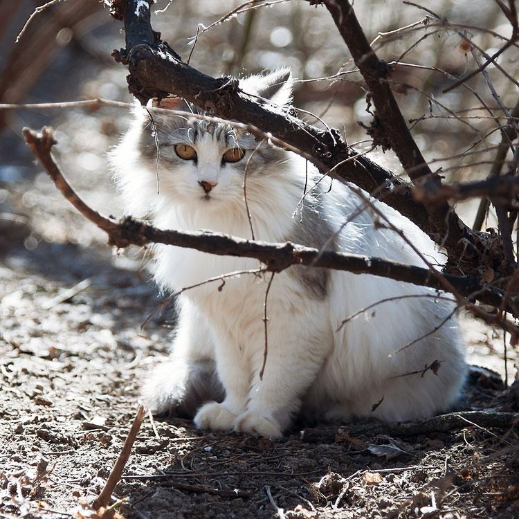 Кошки, собаки и проблема бездомных животных (18)