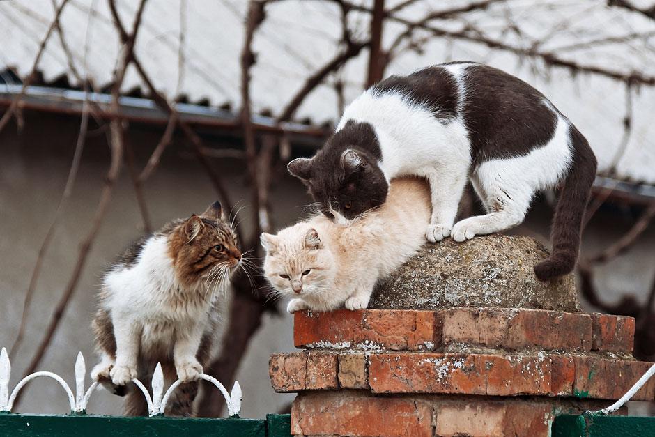 Кошки, собаки и проблема бездомных животных (23)
