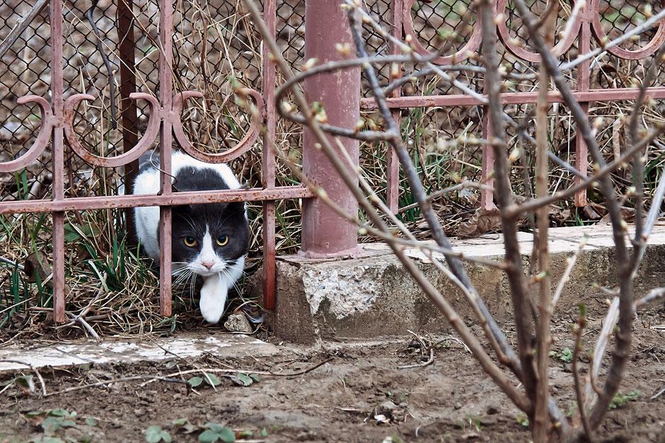 Кошки, собаки и проблема бездомных животных (22)