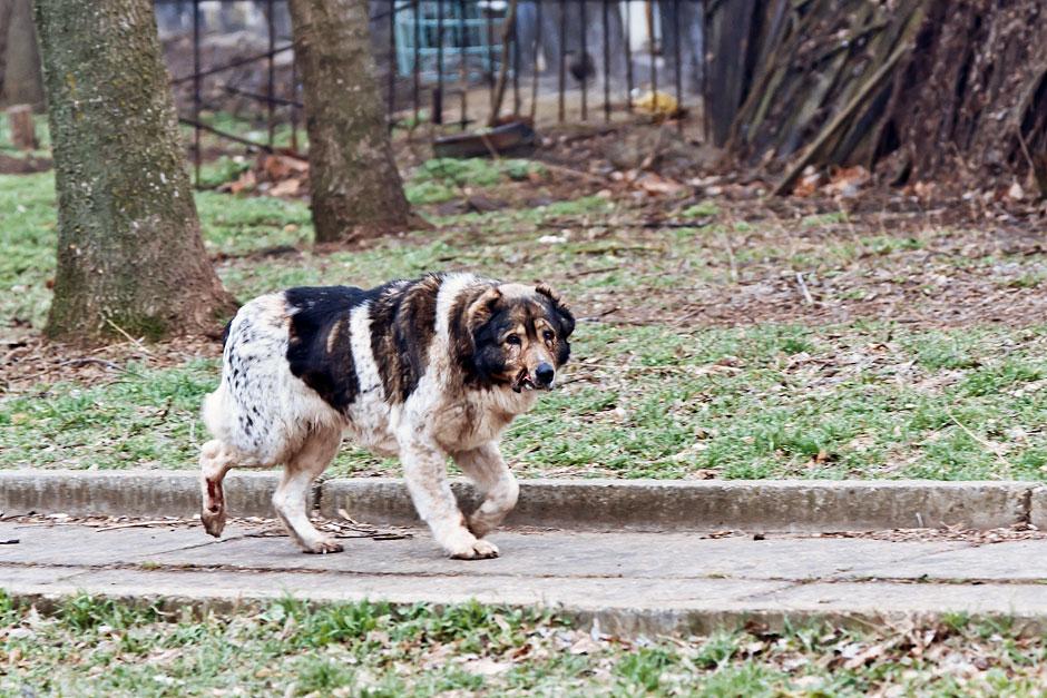 Кошки, собаки и проблема бездомных животных (27)