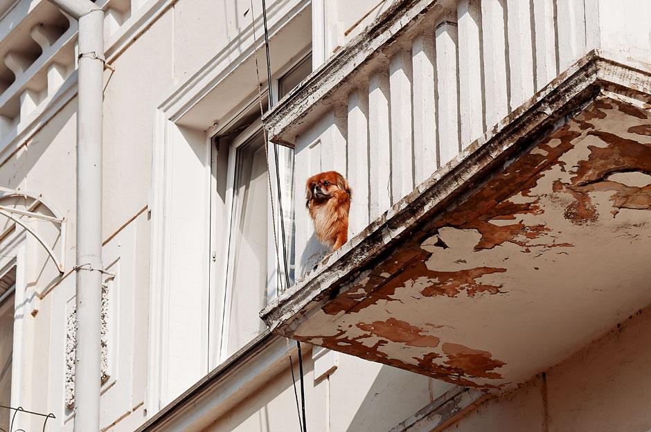 Кошки, собаки и проблема бездомных животных (31)