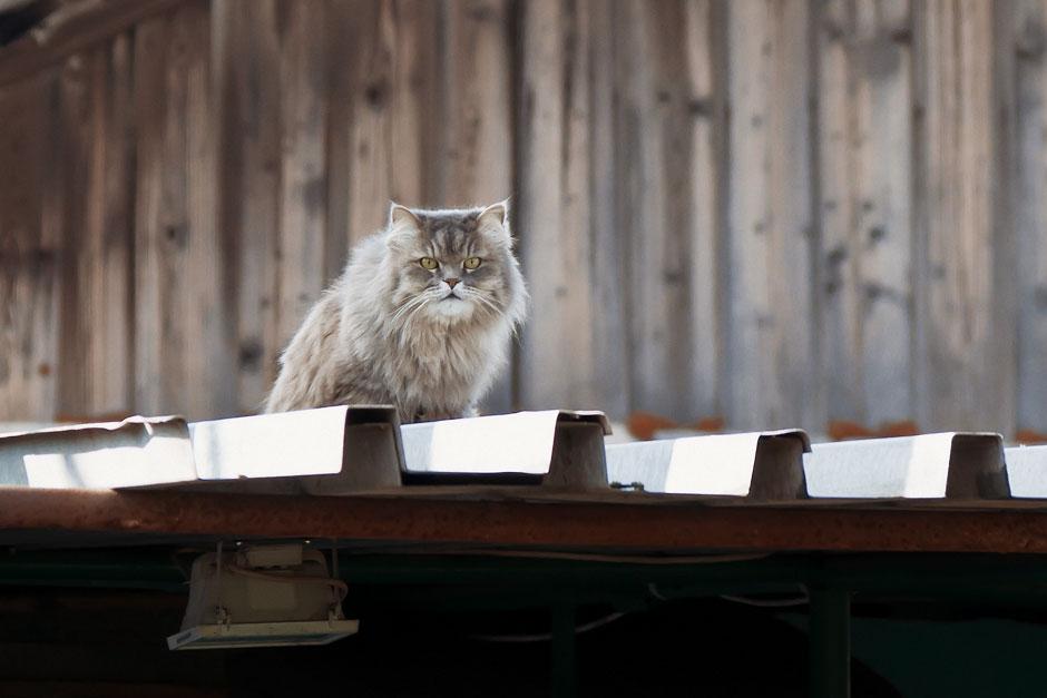 Кошки, собаки и проблема бездомных животных (29)