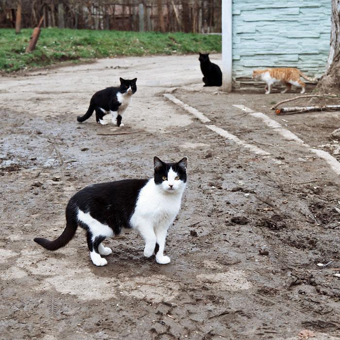 Жизнь бездомных котов