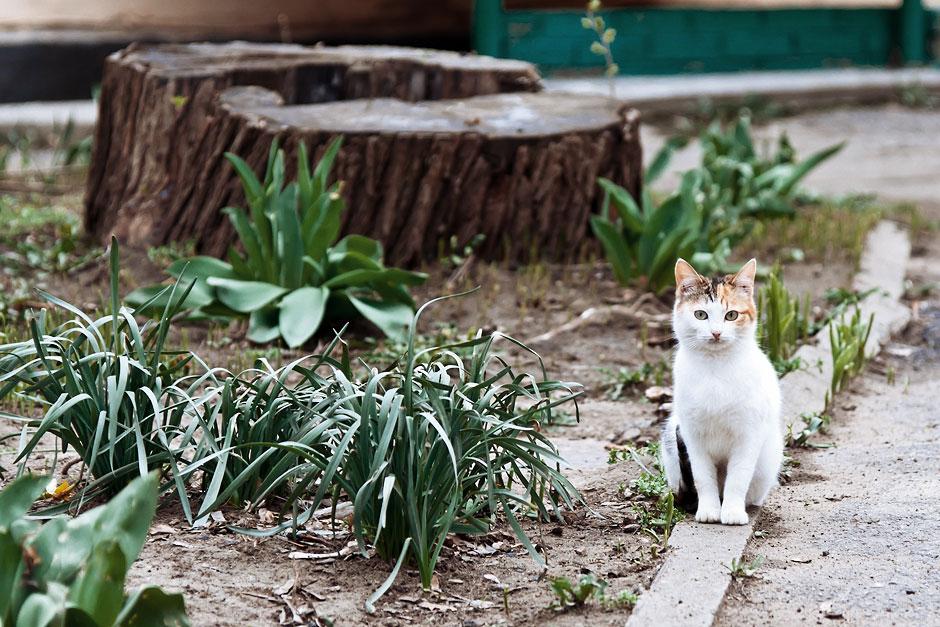 Кошки, собаки и проблема бездомных животных (35)