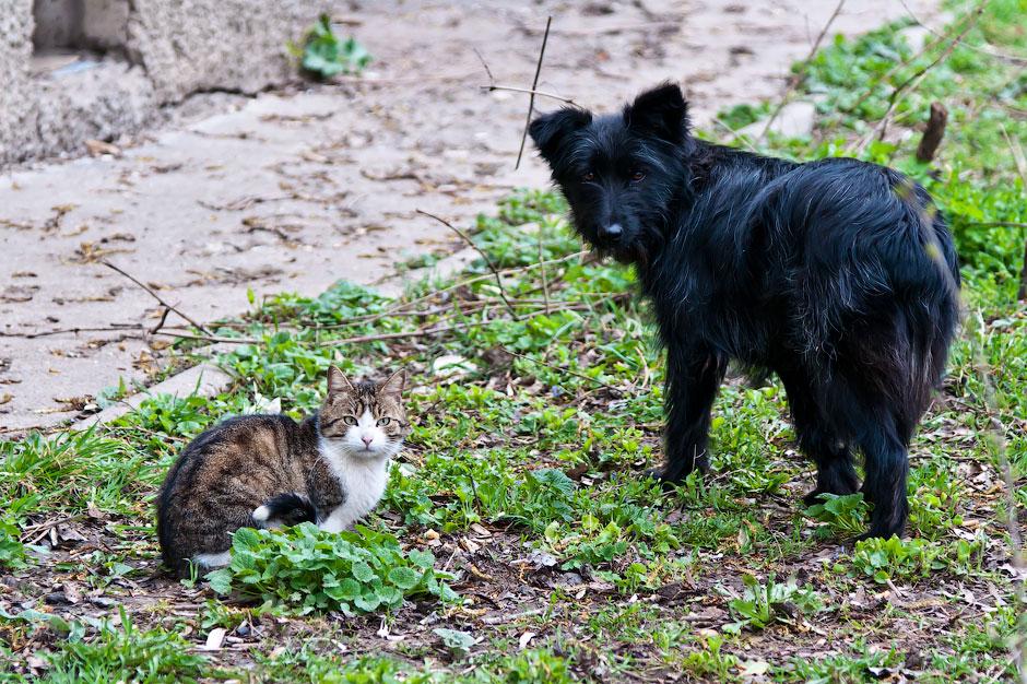 Кошки, собаки и проблема бездомных животных (34)