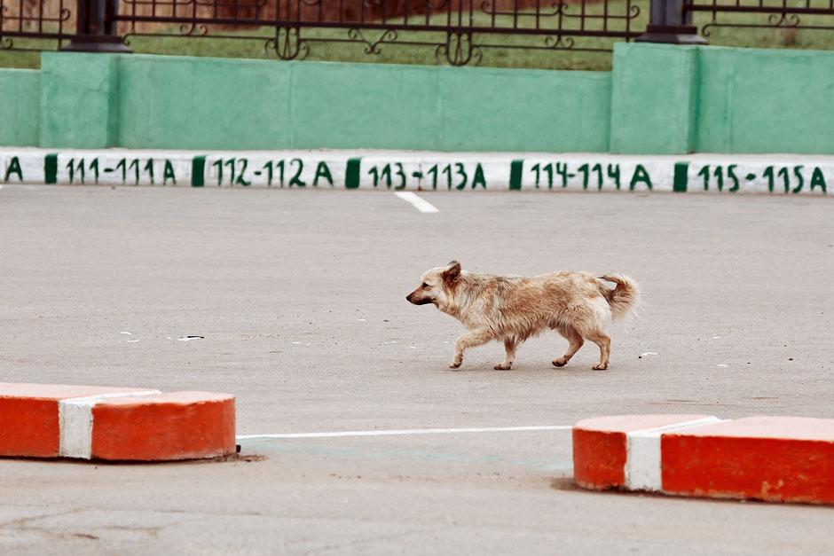 Кошки, собаки и проблема бездомных животных (33)
