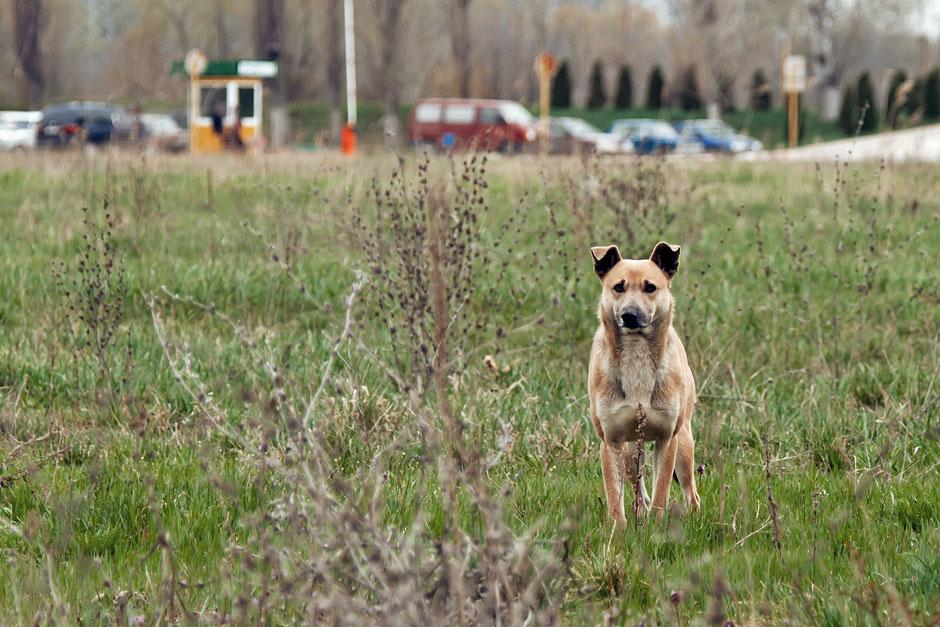 Кошки, собаки и проблема бездомных животных (41)