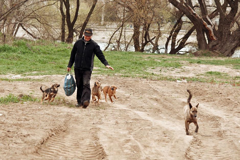 Кошки, собаки и проблема бездомных животных (39)