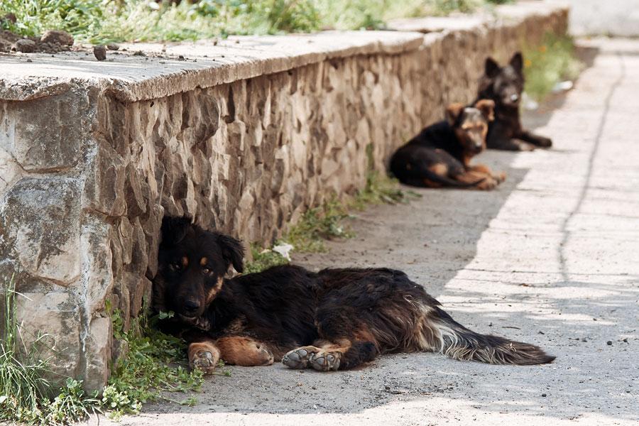 Кошки, собаки и проблема бездомных животных