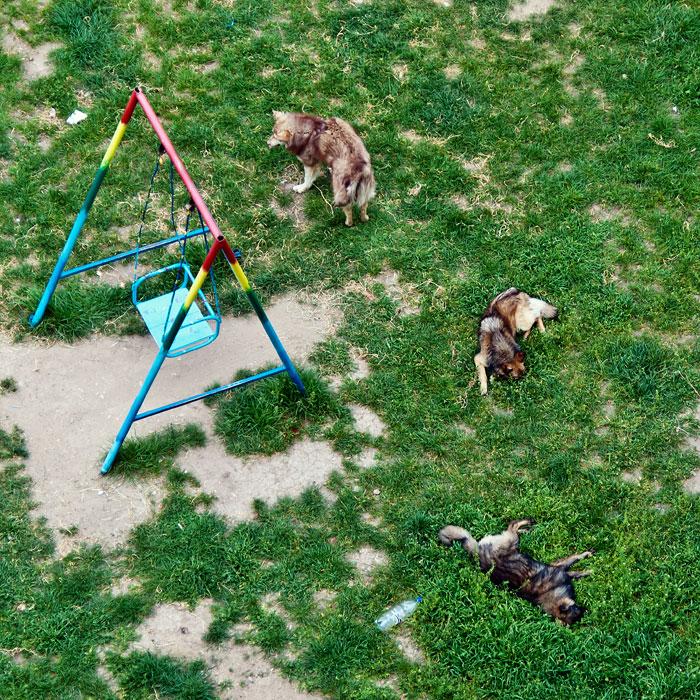 Собаки и кошки Тирасполя