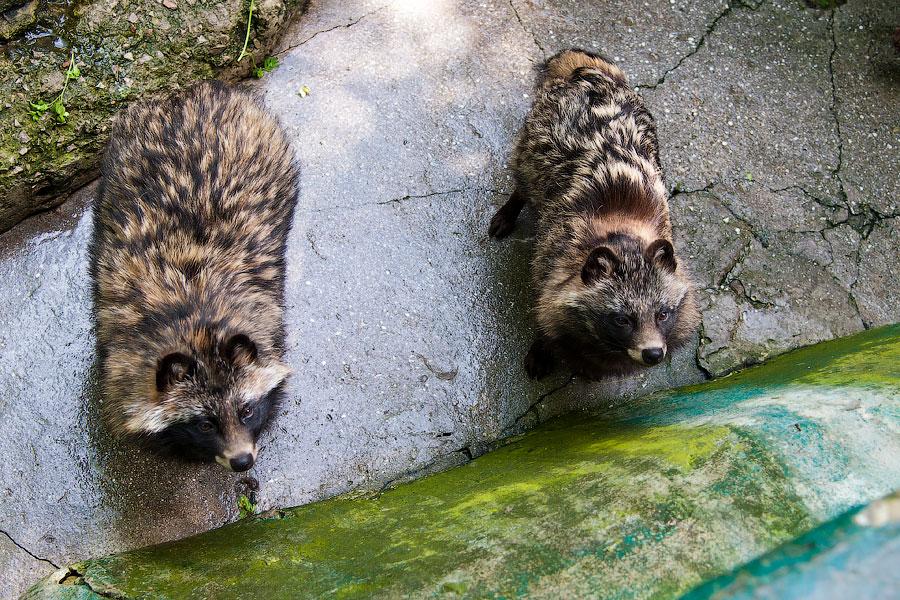 """Зоопарк """"Сказка"""" - Крым, Ялта, 24 мая 2013 года (5)"""