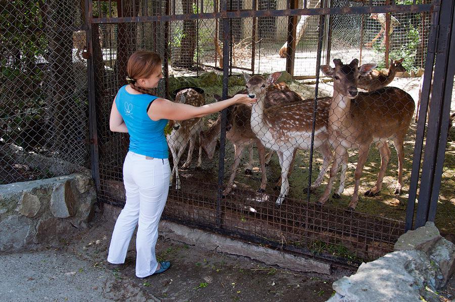 """Зоопарк """"Сказка"""" - Крым, Ялта, 24 мая 2013 года (21)"""