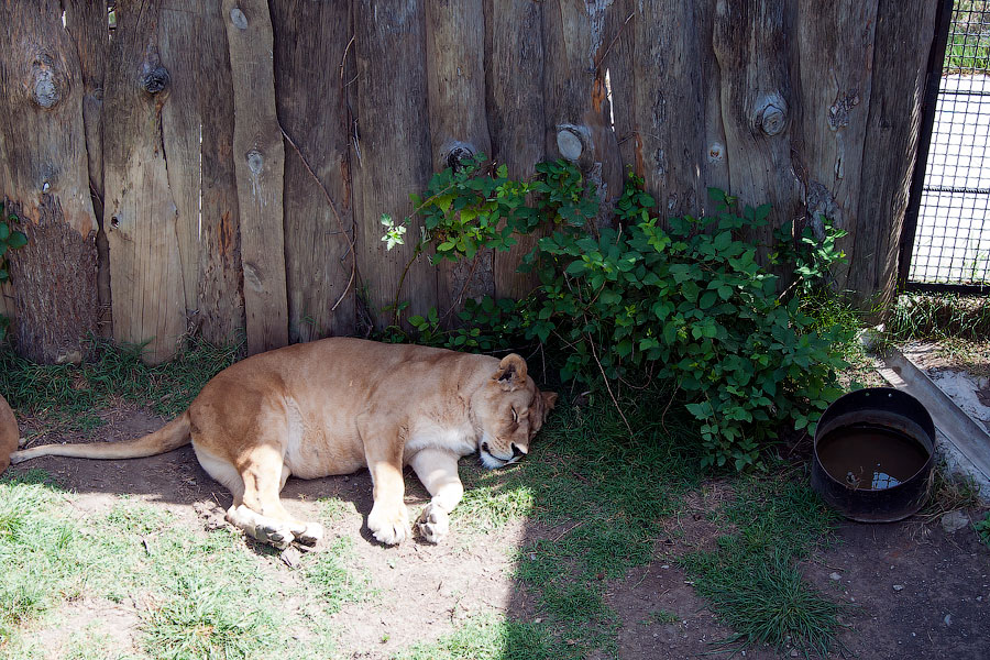 """Зоопарк """"Сказка"""" - Крым, Ялта, 24 мая 2013 года (25)"""