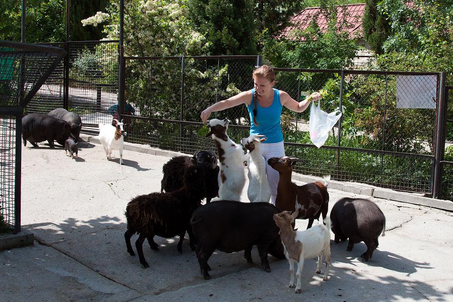 """Зоопарк """"Сказка"""" - Крым, Ялта, 24 мая 2013 года (26)"""