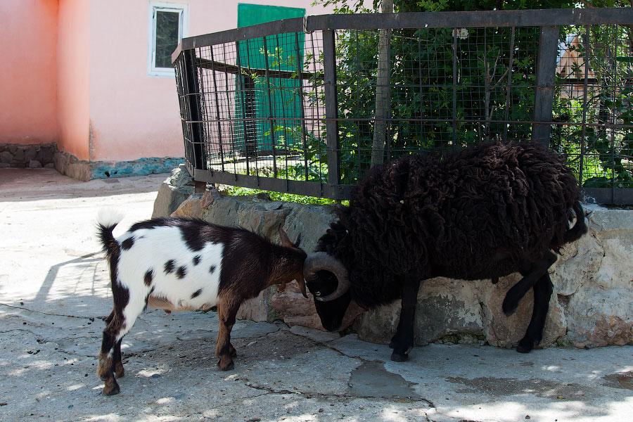 """Зоопарк """"Сказка"""" - Крым, Ялта, 24 мая 2013 года (28)"""