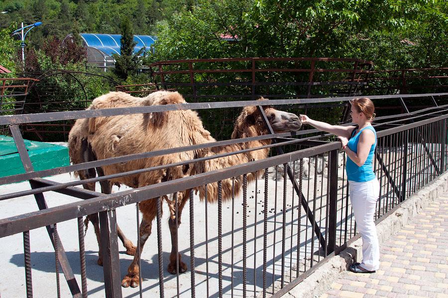 """Зоопарк """"Сказка"""" - Крым, Ялта, 24 мая 2013 года (32)"""