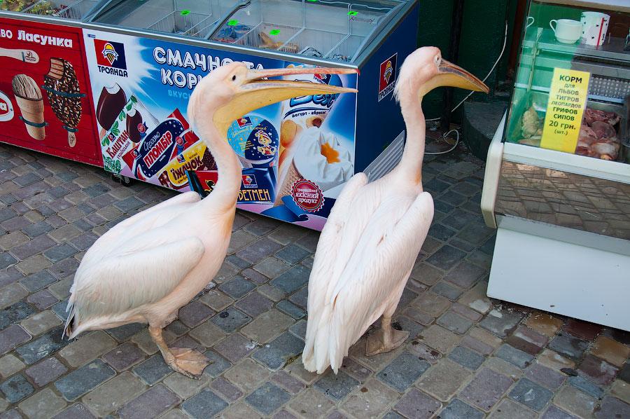 """Зоопарк """"Сказка"""" - Крым, Ялта, 24 мая 2013 года (38)"""
