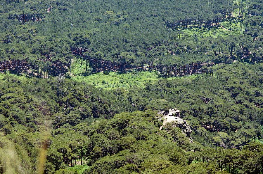 На вершине горы Ай-Петри (7)